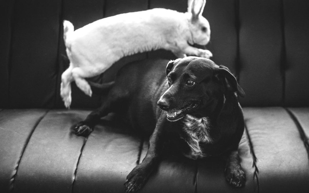 Easter-time pet health hazards
