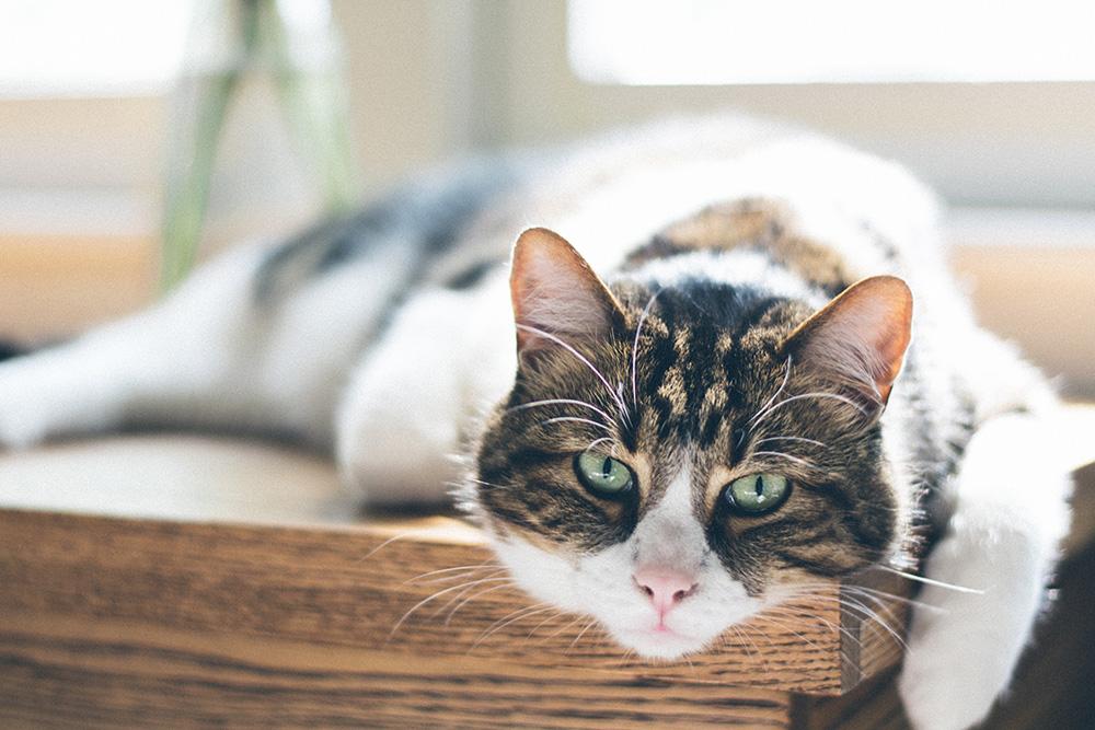 Managing arthritic pets