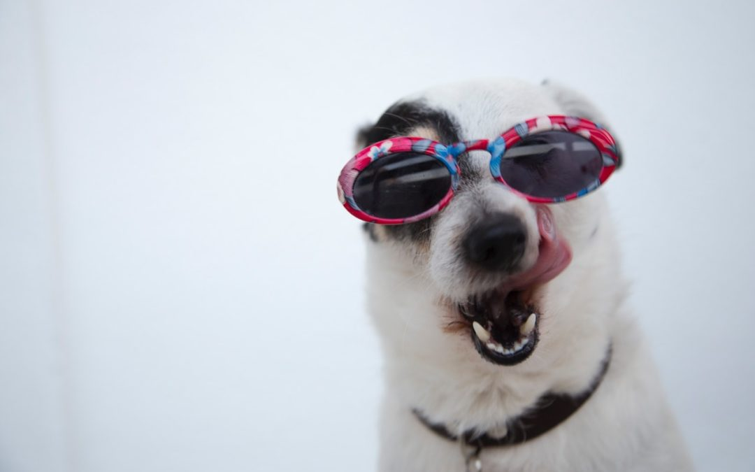 20% off dental procedures for cats and dogs + free Hills T/D food!